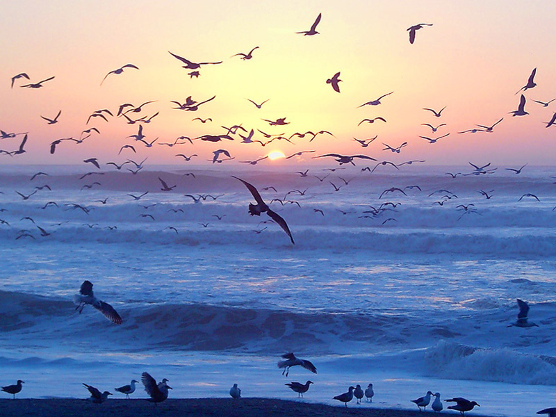 Ocean Walk - Summerland